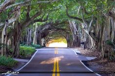Banyan Tree Road Stuart Florida Martin County