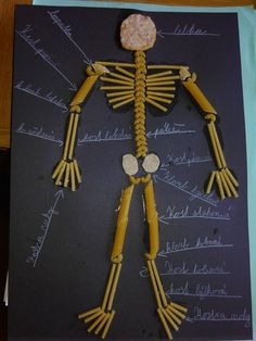 Best Picture For Human Body System notes For Your Taste You are looking for something, and it is going to tell you exactly what you are looking for, and you didn't find that picture. Human Body Crafts, Human Body Science, Human Body Activities, Science Projects For Kids, Science Crafts, School Projects, Science Activities, Skeleton Craft, Human Skeleton