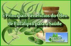 5 Principais Benefícios do Óleo de Eucalipto para a Saúde