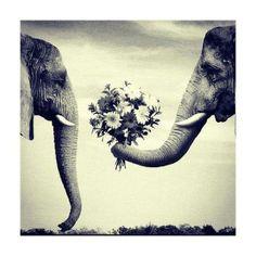 simboliza los sentimientos entre dos animales