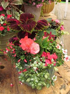 Container gardening for shade