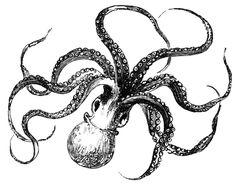 octopus drawings | Octopus