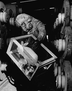 Rabbit used to check for leaks at a sarin production plant.
