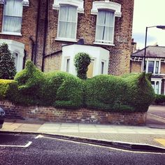 Front Garden Cat Topiary - for all the cat lovers #topiary www.gardenlines.co.uk Garden Whimsy, Cat Garden, Garden Art, Green Scenery, Topiary Garden, Avocado Tree, Cat Statue, Formal Gardens, Gardens