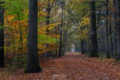 Photo Fall Path In The Forest in  Landgoed Geijsteren by William Mevissen. Landscape and Nature Photography at www.williammevissen.nl.