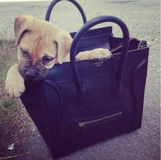 or should i say rich dogs who have nice bags