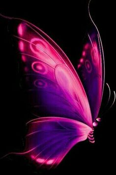 Most Beautiful Butterfly Pictures - Wish Letter - Most Beautiful Butterfly Pictures – Wish Letter The Effective Pictures We Offer You About sunflow - Purple Butterfly Tattoo, Butterfly Clip Art, Butterfly Drawing, Butterfly Painting, Butterfly Wallpaper, Butterfly Flowers, Butterfly Watercolor, Beautiful Butterfly Pictures, Butterfly Photos