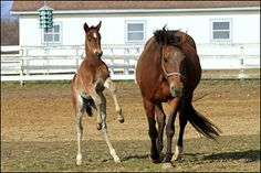 Standardbred Canada's Nurse Mare Program is designed to assist in matching orphaned or rejected foals with nurse mares, and now the process is even easier!