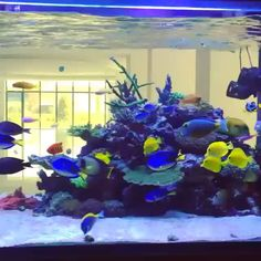 Salt Water Aquarium 75 Gallon - Stocking Ideas-Salt Water Aquarium 75 Gallon – Stocking Ideas Best Fish for a 75 Gallon Saltwater Aqaurium (Buying Guide) - Cichlid Aquarium, Saltwater Aquarium Fish, Reef Aquarium, Saltwater Tank Setup, Home Aquarium, Cool Fish Tanks, Amazing Fish Tanks, Tetra Fish, Fish Tank Design