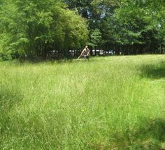 5 Acres & A Dream: Homestead Haying
