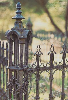 Happy Fence {Friday the Edition! Love the fence and cobweb. Old Gates, Metal Gates, Wrought Iron Fences, Garden Gates And Fencing, Fence Gate, Colorful Roses, Iron Art, Fence Design, Garden Design