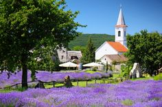 Hungary, Golf Courses, Lavender, New Homes, Landscape, Google Search, Scenery, Corner Landscaping