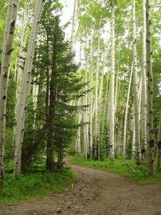 Arizona hiking: Inner Basin Trail near Flagstaff is a cool summer hike.