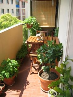 Balcony garden by Anibelle. Great go enjoy your balcony while having a small meal. Small Balcony Design, Small Balcony Garden, Balcony Plants, Small Space Gardening, Balcony Gardening, Balcony Ideas, Pergola Ideas, Garden Plants, Apartment Patio Gardens