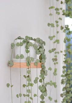 Hanging plants, creative ideas for hanging plants indoors and outdoors - indoor . - - Hanging plants, creative ideas for hanging plants indoors and outdoors - indoor outdoor hanging planter ideas Belle Plante, Decoration Plante, Home Decoration, Decorations, Plant Basket, Outdoor Plants, Indoor Outdoor, Plants Indoor, Succulent Outdoor