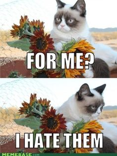 Grumpy cat hates flowers...and everything else too.
