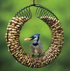 Unique bird feeder from slinky. Original DIY here: http://www.birdsandblooms.com/blog/slinky-diy-bird-feeder-for-peanuts/