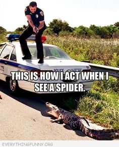 only for black widows... but I scream too...