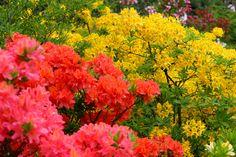 Colours of Spring... Ujazdow, Warsaw, Masovian, Poland.