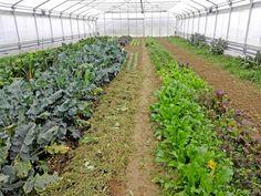 Aussaatpläne im Februar, Gemüse anbauen im Februar Bokashi, Party Buffet, Ombre Hair, Beets, Aloe Vera, Vineyard, Leaves, Plants, Outdoor