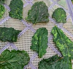 Broccoli greens, beet greens, spinach... any tender green leaf, apparently.  Toss in olive oil and seasonings, but place foil in the bottom of the dehydrator to catch any possible drips.