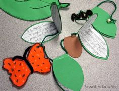 Writing about the stages of a butterfly's life cycle.