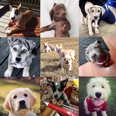 Happy National Puppy Day! You can't have a bad day when puppies are involved :)