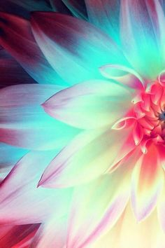 lotus flower with these colours for a tattoo Picture Tattoos, Cool Tattoos, Tattoo Pics, Tattoo Ideas, Bild Tattoos, Feather Tattoos, Motif Floral, Flower Wallpaper, Belle Photo