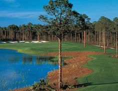 Sandestin offers Florida golf vacations for those who want to Stay & Play. This luxury golf resort boasts four Destin golf courses for your enjoyment. Florida Golf Courses, Public Golf Courses, Best Golf Courses, Golf Club Reviews, Golf Course Reviews, Golf Club Sets, Golf Clubs, Golf Card Game