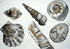 shelldrawing.JPG 1,600×1,125 pixels
