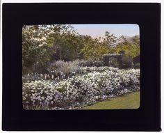 "[""Glen Oaks,"" James Hobart Moore house, East Valley Road, Montecito, California. Pyrethrum border]"