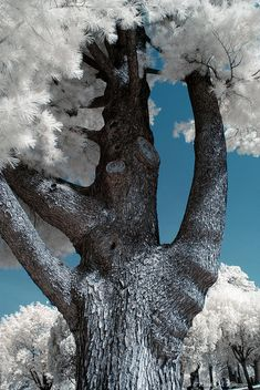 ✯ Tree Of Life Photograph