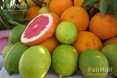 Fruit Arrangement Photographed by Siham Laajila - Morocco - Grapefruit - Lime - Orange - Get Well - FairMail - Fair Trade Photos - MSIL-0005