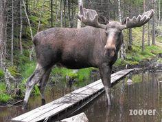 Idre, Zweden #scandinavie #natuur #zweden