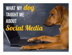 what-my-dog-taught-me-about-social-media by Social Squared via Slideshare