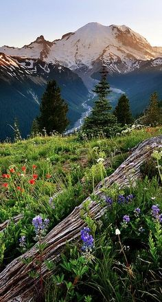 Mt. Rainer in the Cascade Mountains of Washington • photo: Chung Hu on Flickr