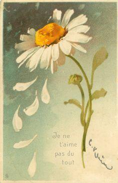 JE NE T'AIME PAS DU TOUT  six petals fall from daisy