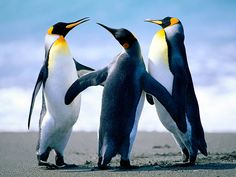 penguin - Google zoeken