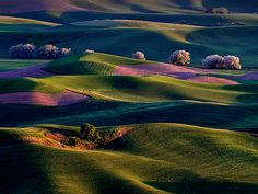 Palouse Region, Washington The sunrise brightens colorful patterns in Washington's fertile countryside.