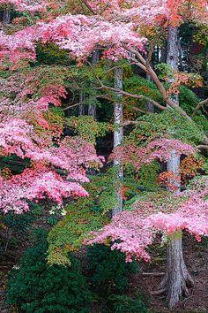 Japanese Garden by Alenmurr