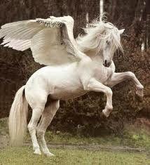 Pegasus.  ~ ( Researching the Fantastical! www.EKaiserWrites.webs.com)