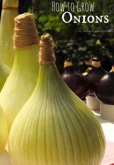 Easy way to grow onions. Tips for growing onions. How to grow onions in your garden backyard. Veg Garden, Fruit Garden, Edible Garden, Vegetable Gardening, Growing Onions, Growing Veggies, Growing Plants, Fruit And Veg, Fruits And Veggies