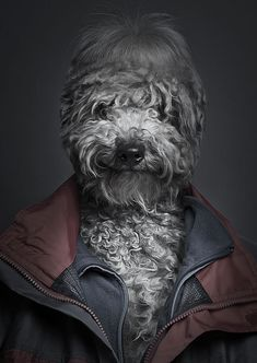 Funny Dogs by Sebastian Magnani