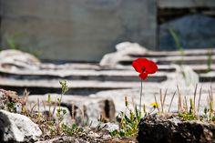 Athens, Greece by Olga Larkina Photography www.olgalarkina.com Athens Greece, Photography, Photograph, Fotografie, Photoshoot, Fotografia