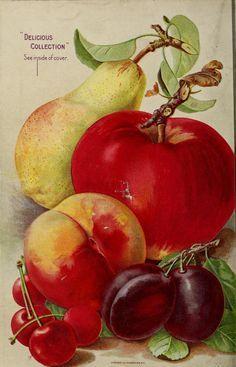 The Templin Companyseed catalogue 1907,  back cover