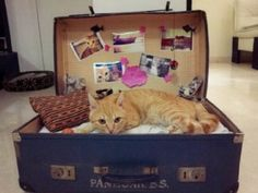 "DIY cat bed, old suitcase... Love the ""photo wall"" haha! Too cute!"