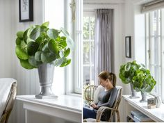 Beautiful Pilea peperomioides