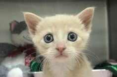 Help us win the Challenge! Fundraising Page, Make A Donation, Medical Care, Humane Society, Vulnerability, Kittens, Challenges, Pets, Animals