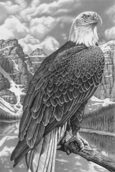very detailed drawling of an eagal