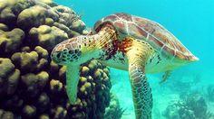 Sea turtle! Diving in Mexico #underwater #KILROY